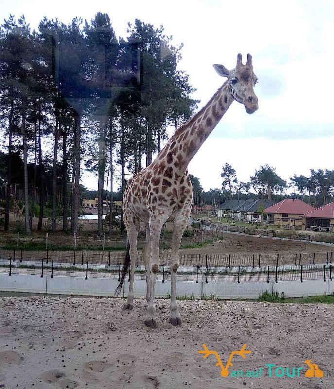 Niederlande Safari